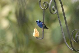 This lovely little bird is one of many who visit our bird feeders daily!